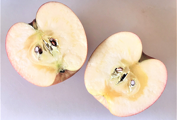 中に蜜(透き通っている部分)があるものは、甘さがありますが、傷みやすいので、早くいただきましょう。
