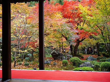 京都府では、11月中旬から12月初旬まで、紅葉が見頃