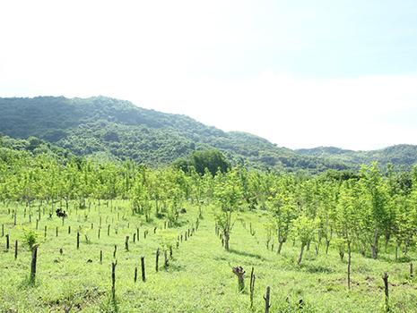 フィリピンの在来種を自然農法・無農薬で栽培