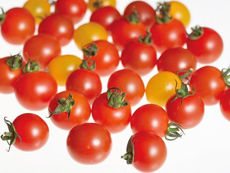 「甘みとうまみが際立っている」と今、評判の「オスミックトマト」