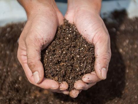 栽培には、独自開発の「オスミックソイル」という有機培土を使用しています