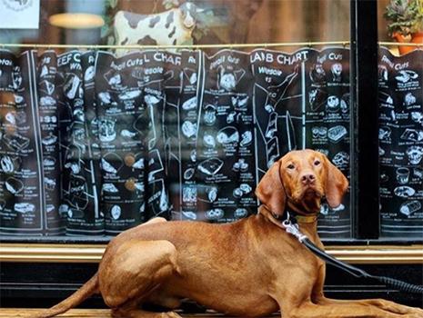 お店の前に置かれたベンチで近所に住む人々が犬と一緒にくつろいでいます。
