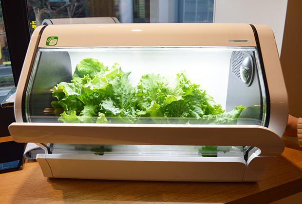 ITの力で野菜を育てる?!「やさい物語」