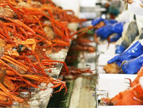 「紅ズワイガニ」の水揚げ日本一をほこる鳥取県境港市