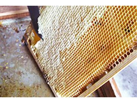 近所の養蜂家さんが訪ねてきて、ハチミツを使った商品を作りたいとのことでご相談を受けたんです