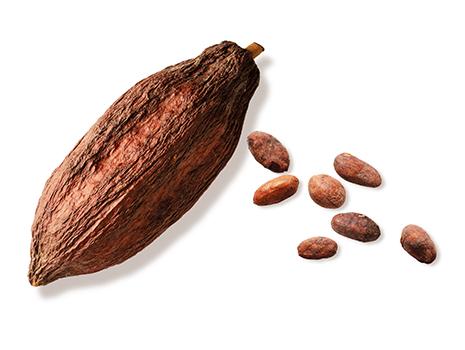当社では2年前から台湾の農園に専用の畑をもち、栽培から携わることで理想のチョコレートを追求しました