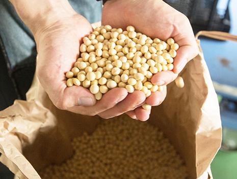 近年は自社で種苗管理から生産管理までを行ったオーガニックの大豆も使用